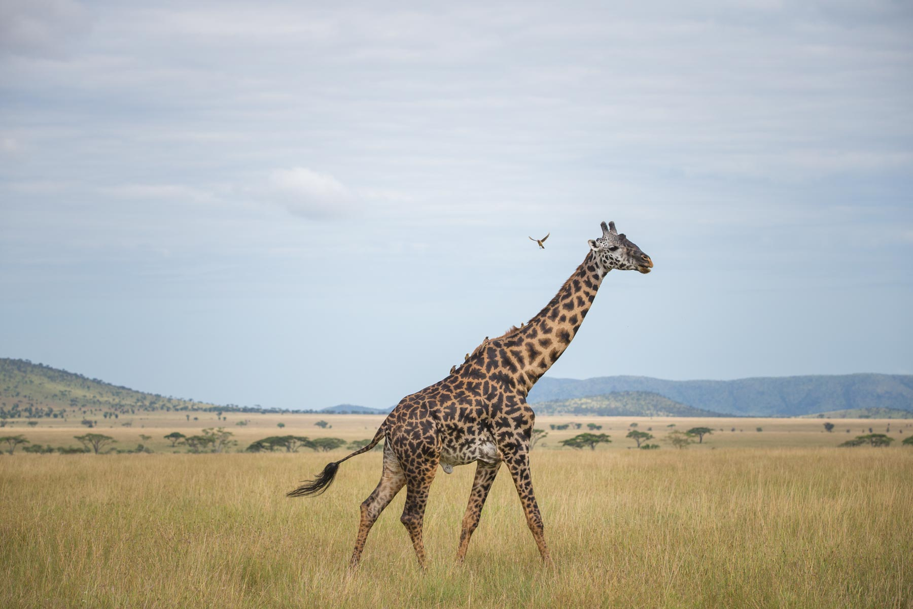 14 Days Kenya Adventure Safari
