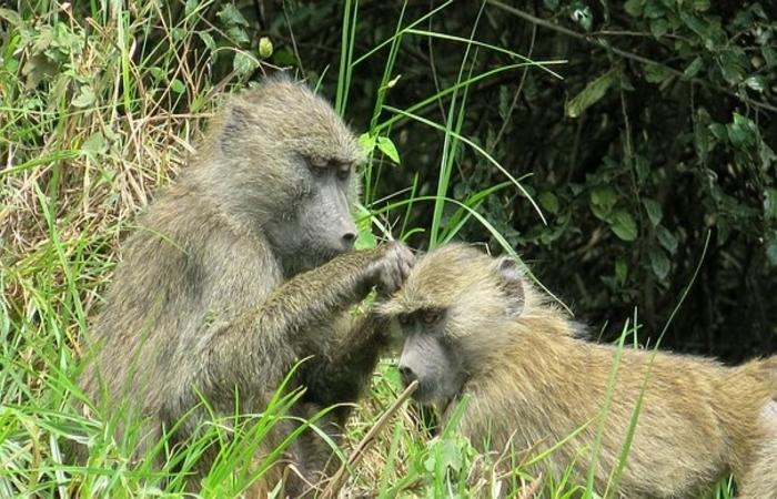 monkeys in Arusha national park