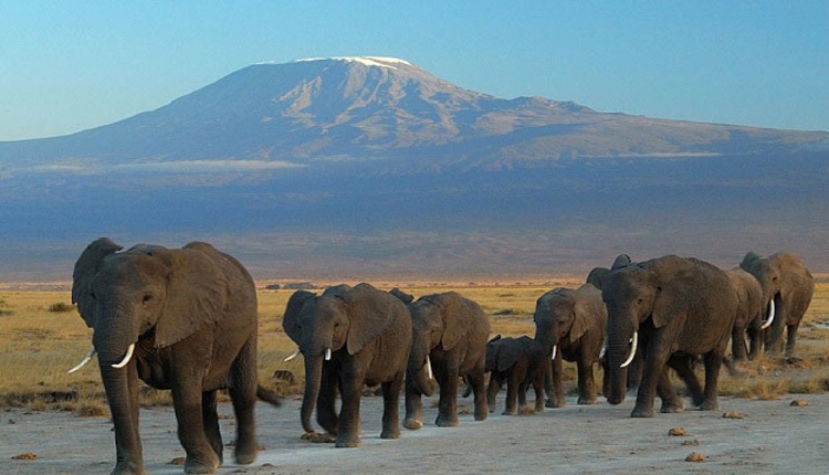 herd of elephants in Arusha National Park