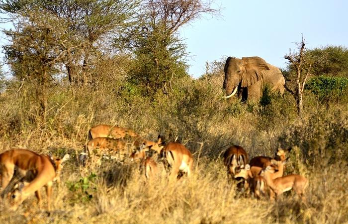 animals in tarangire national park
