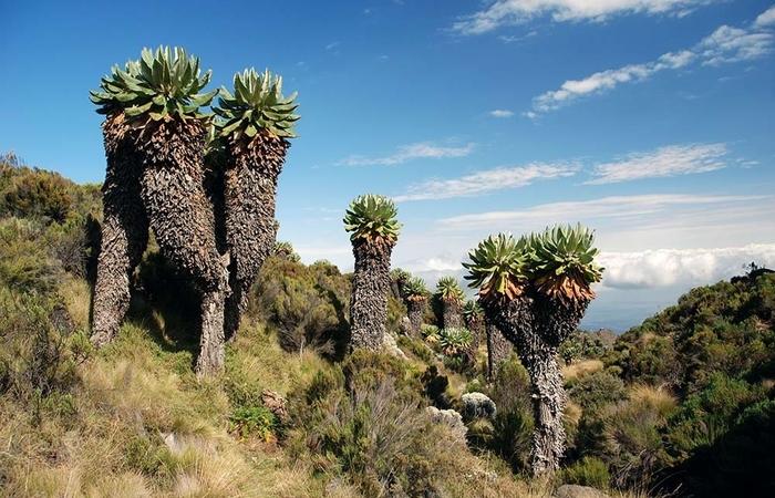 kilimanjaro national park landscape