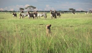 lush vegetation in Serengeti