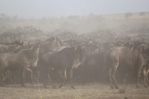 great migration explained, which month is the best to see them?