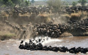 the dramatic Mara River crossing